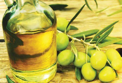 olive-oil-olive-branch